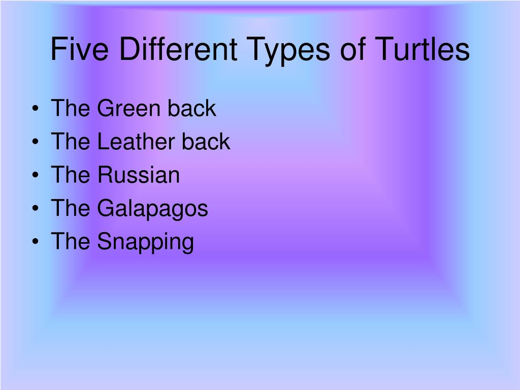 Five Different Types of Turtles