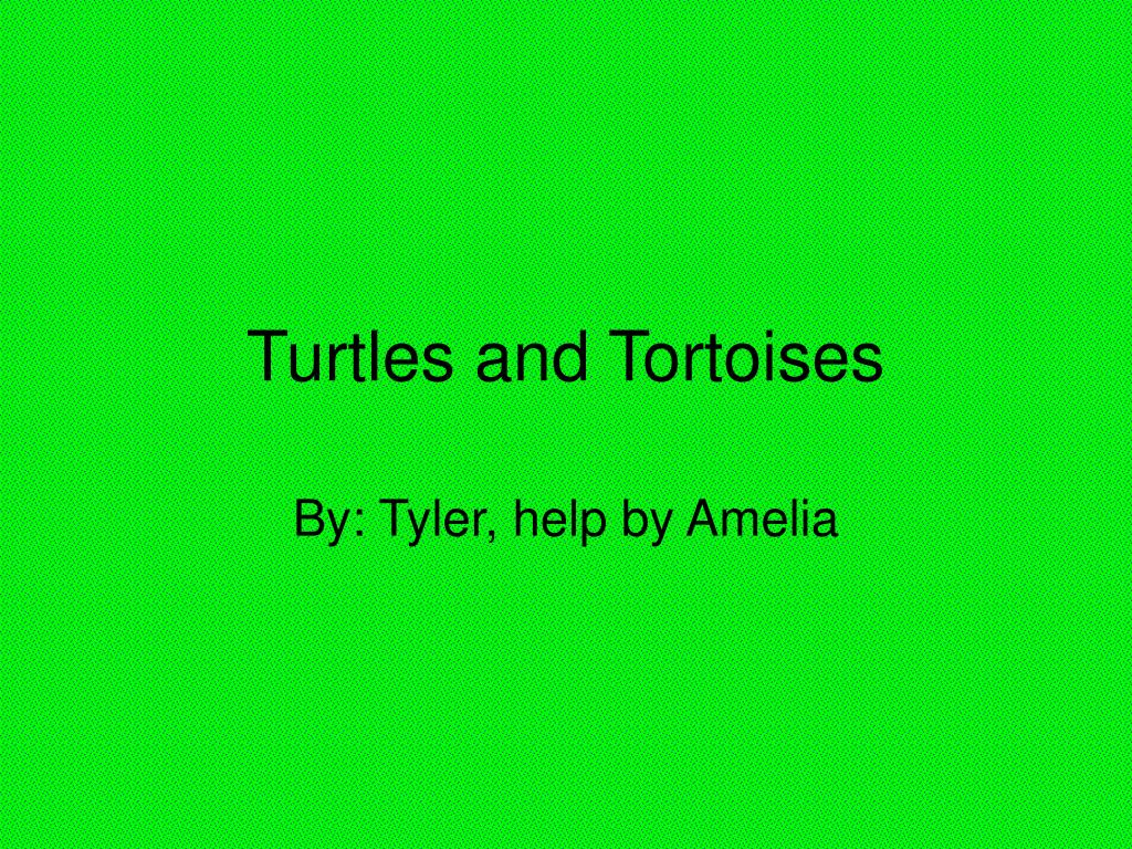 turtles and tortoises l.