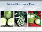 artificial selection in plants