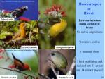 honeycreepers of hawaii
