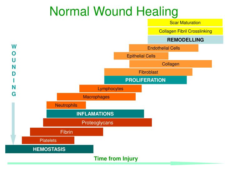 PPT - Normal Wound Healing PowerPoint Presentation - ID:817945