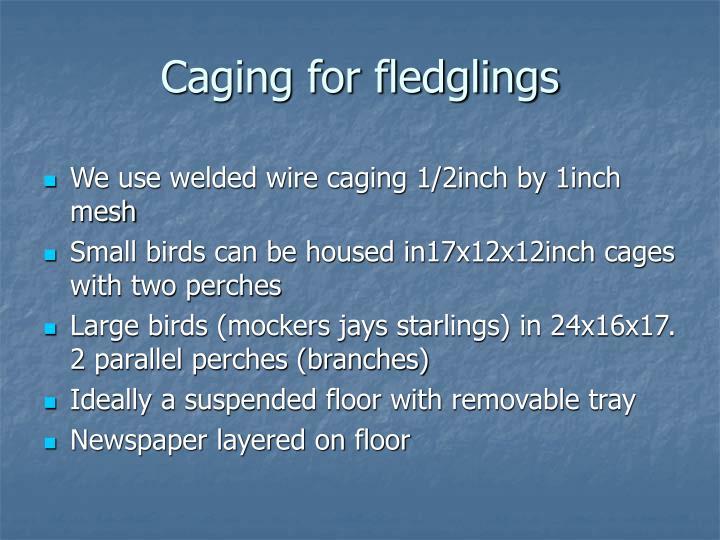 Caging for fledglings