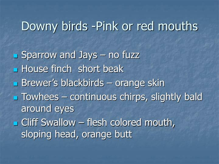 Downy birds -Pink or red mouths