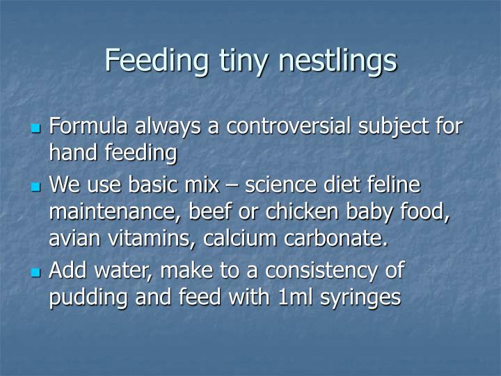 Feeding tiny nestlings
