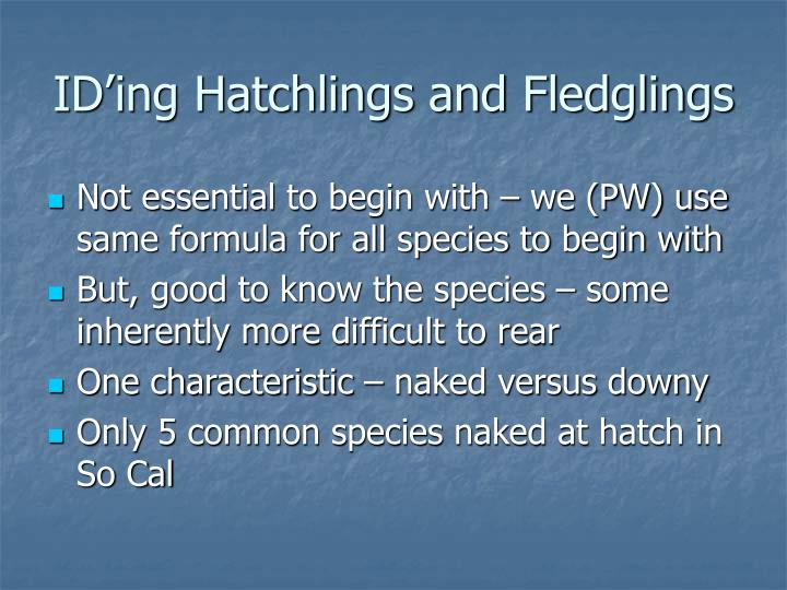 ID'ing Hatchlings and Fledglings