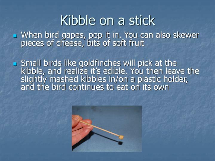 Kibble on a stick