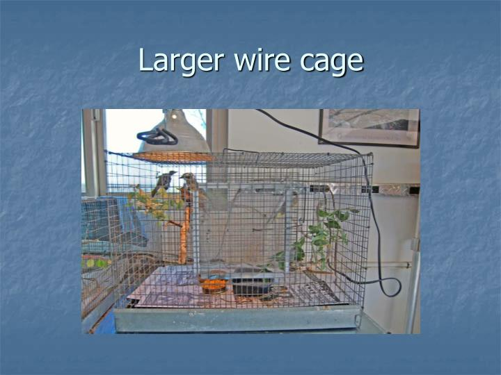 Larger wire cage