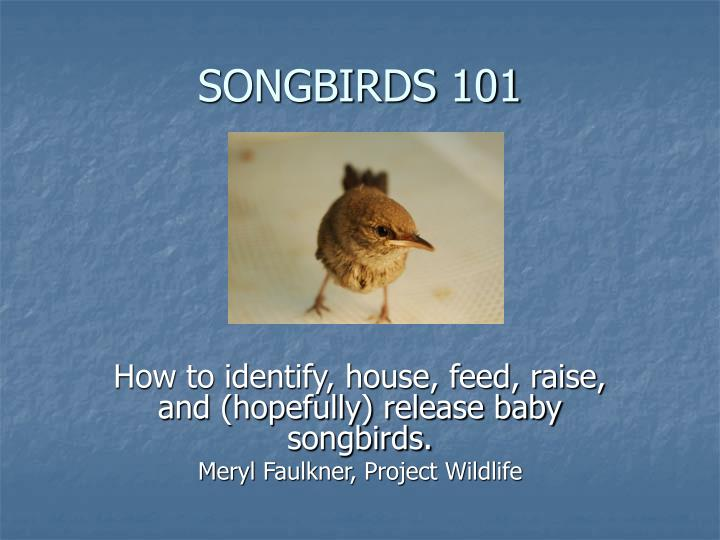 How to identify, house, feed, raise, and (hopefully) release baby songbirds.