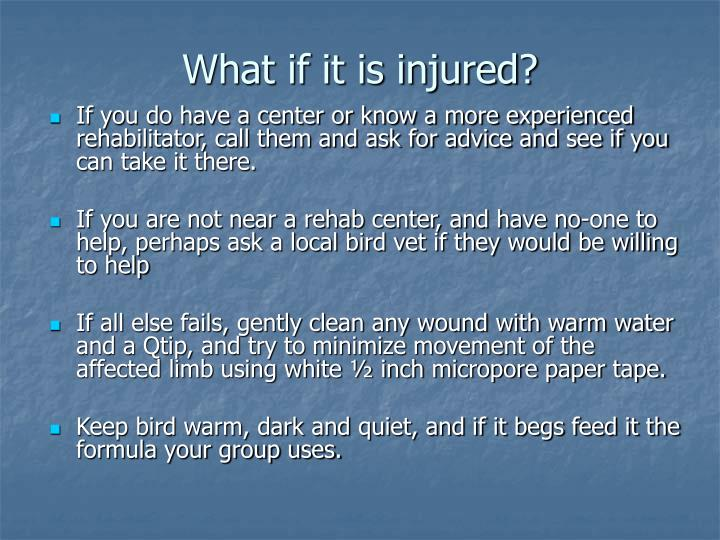 What if it is injured?