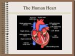 the human heart10