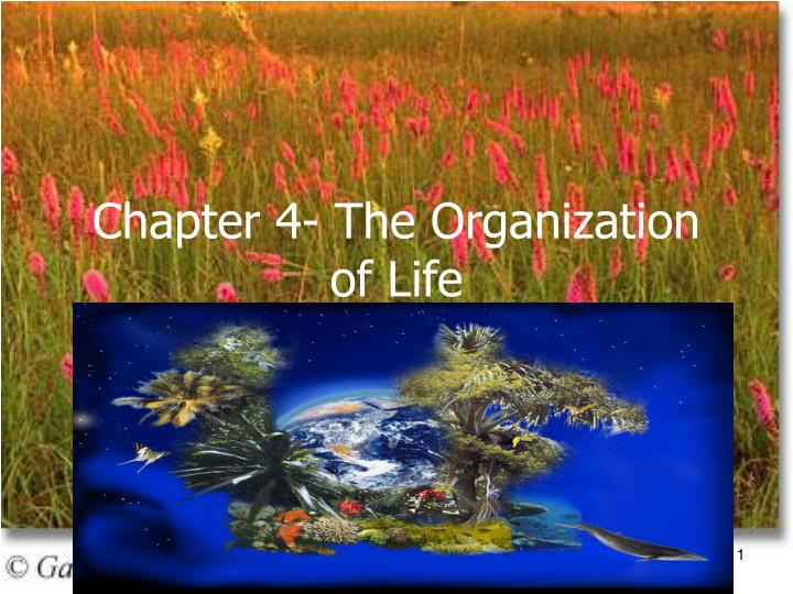 chapter 4 the organization of life n.