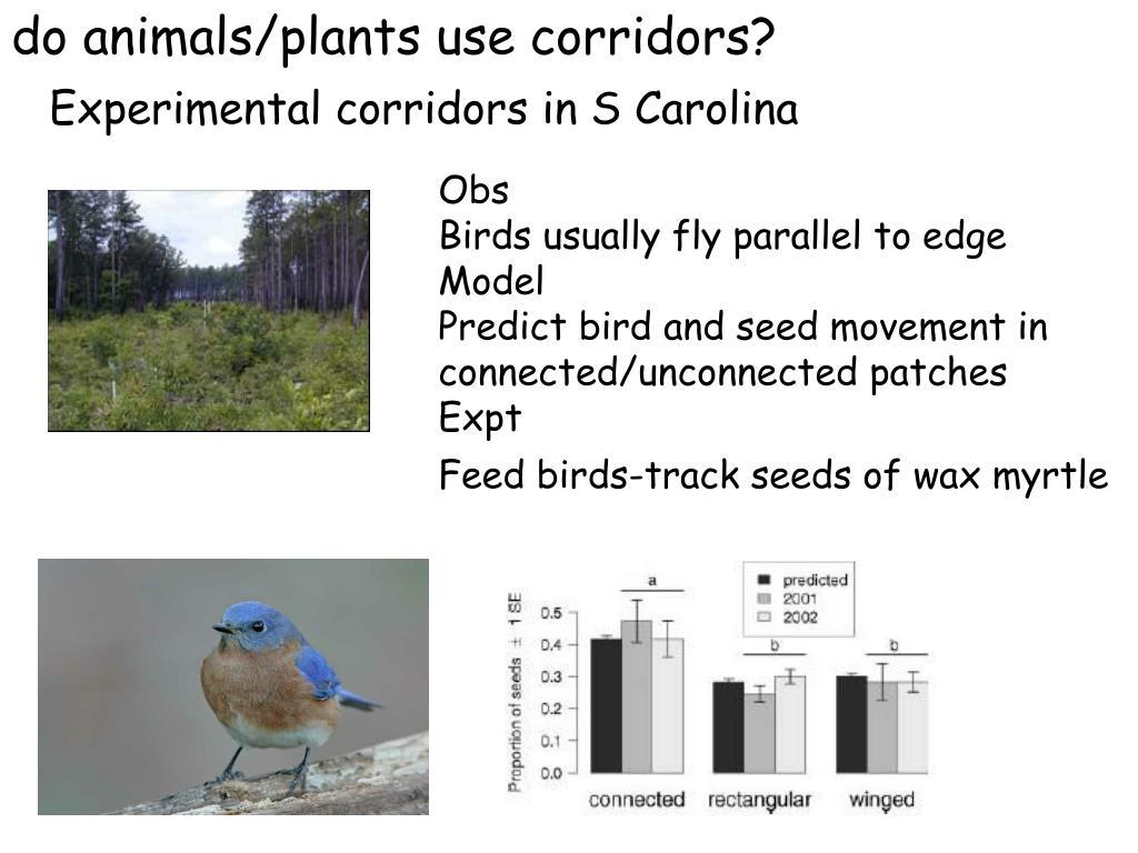 do animals/plants use corridors?