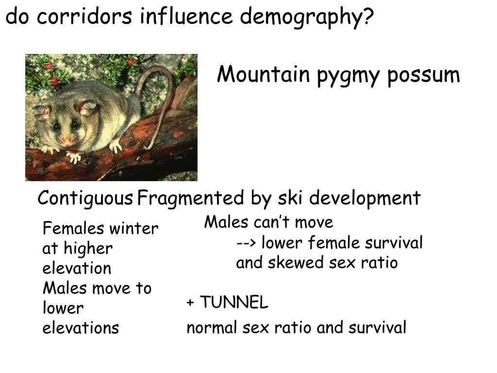 do corridors influence demography?