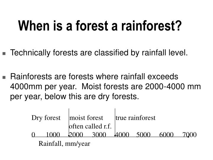 When is a forest a rainforest