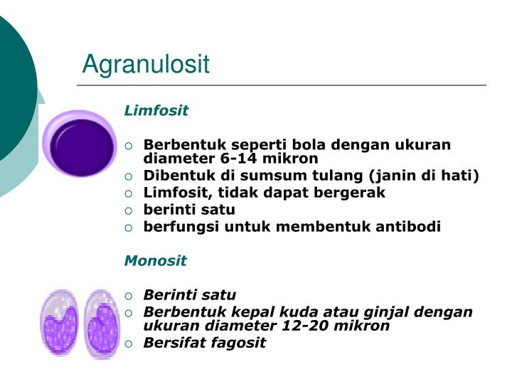 Agranulosit