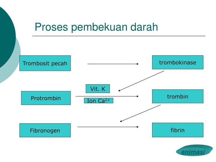 Proses pembekuan darah