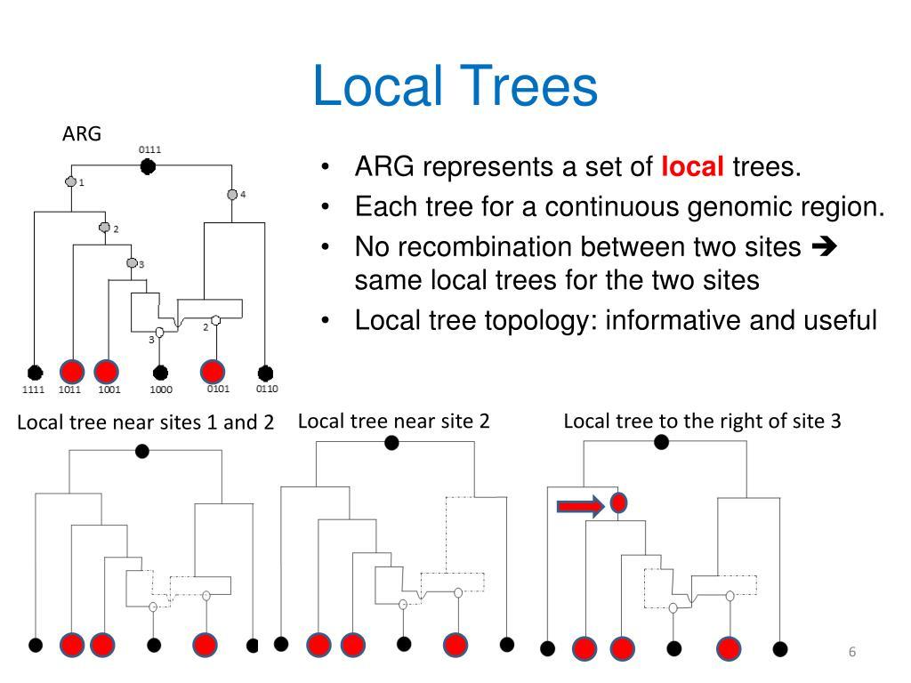 Local Trees