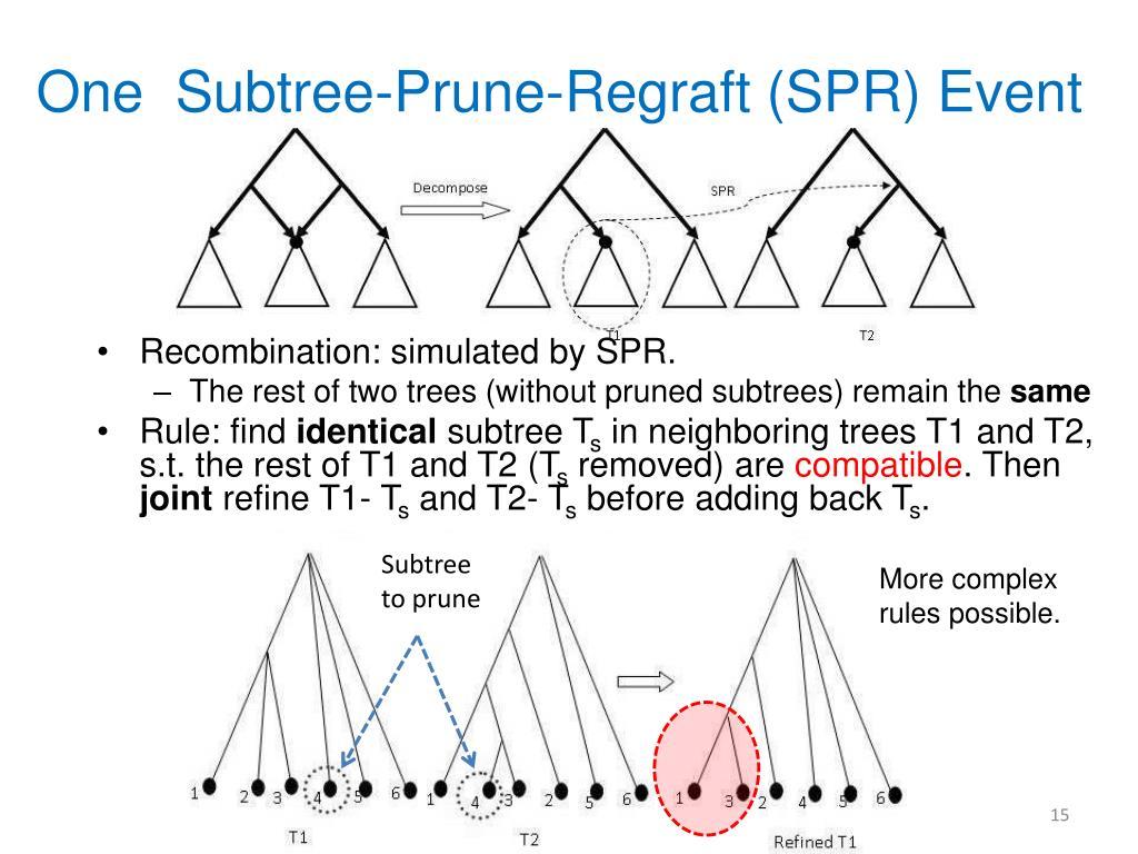 One  Subtree-Prune-Regraft (SPR) Event