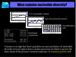 what explains nucleotide diversity