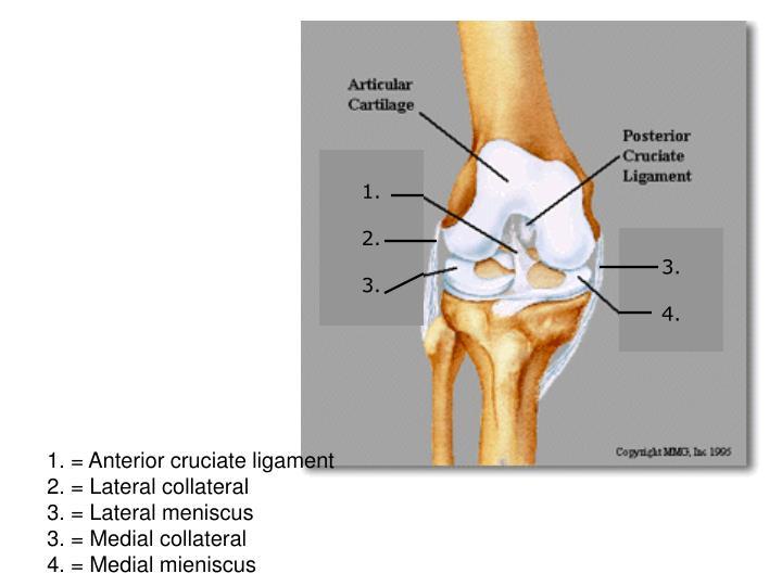 posterior cruciate ligament litt review