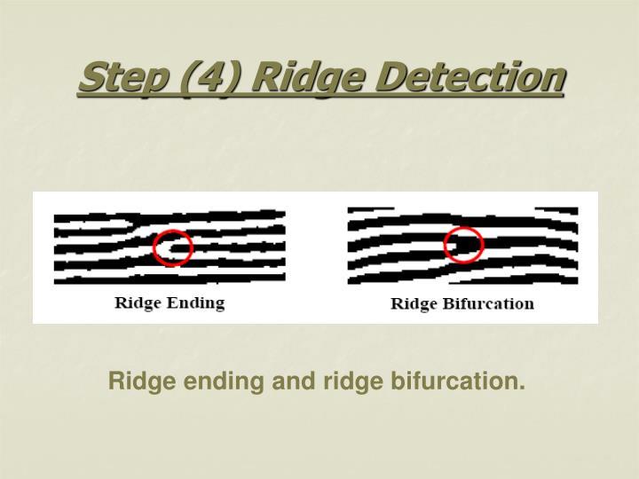 Step (4) Ridge Detection