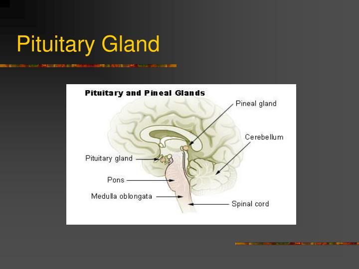 Pituitary gland1