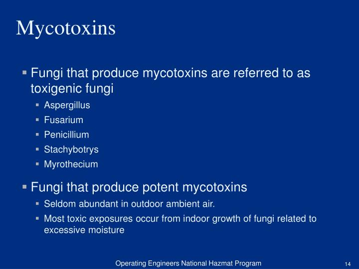 Fungi that produce mycotoxins are referred to as toxigenic fungi