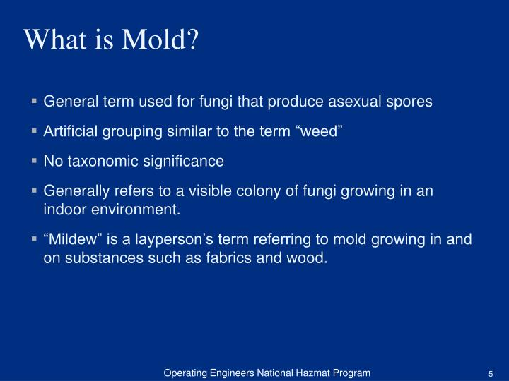 General term used for fungi that produce asexual spores