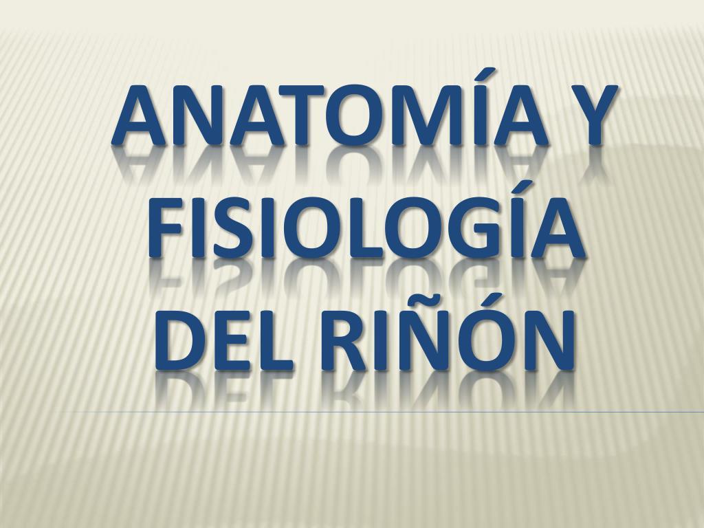 PPT - ANATOMÍA Y FISIOLOGÍA DEL RIÑÓN PowerPoint Presentation - ID ...