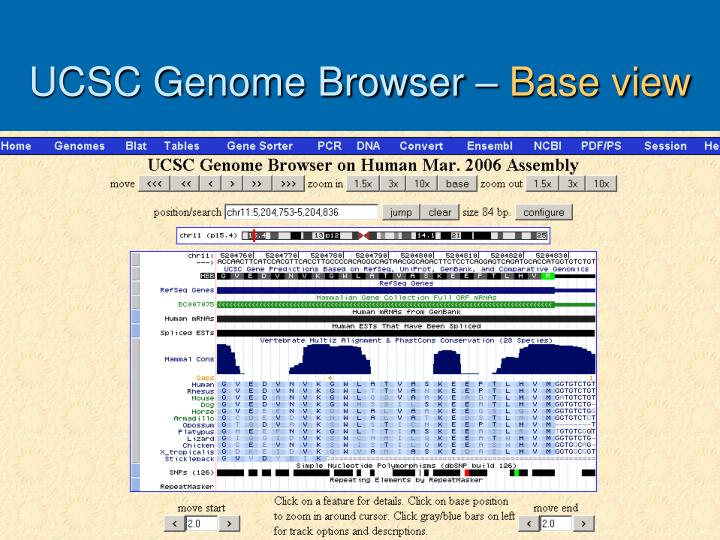 UCSC Genome Browser –