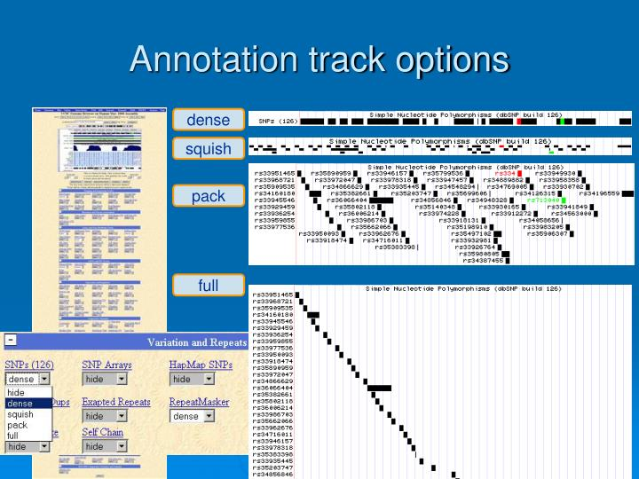 Annotation track options