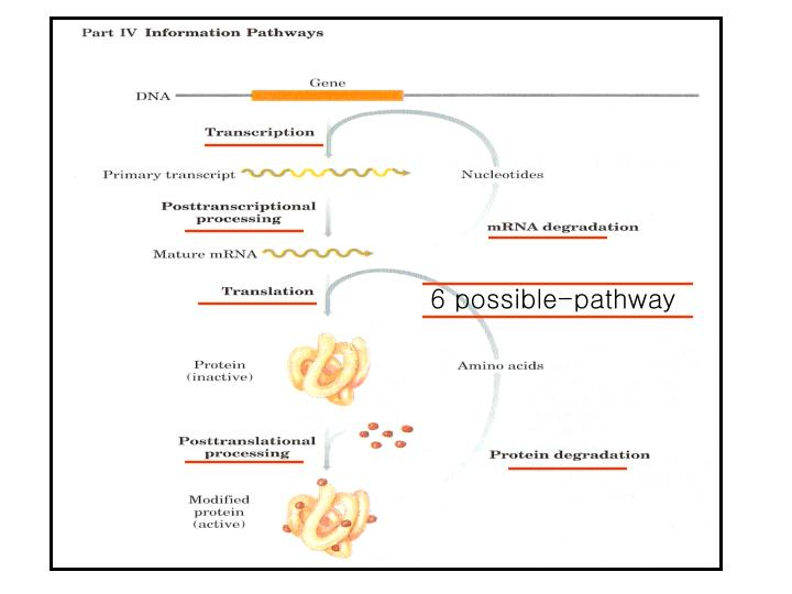 6 possible-pathway