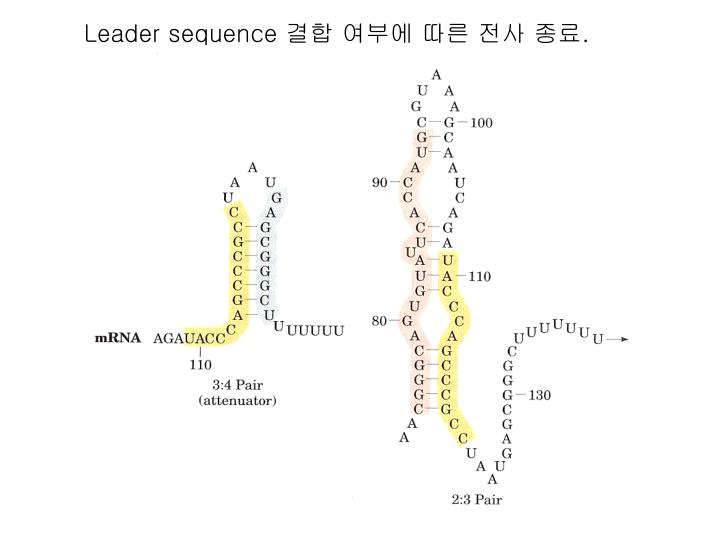 Leader sequence