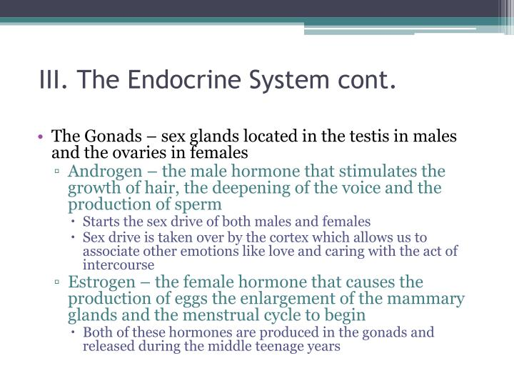III. The Endocrine System cont.