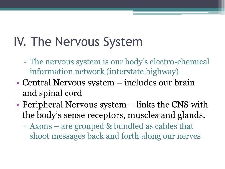 IV. The Nervous System