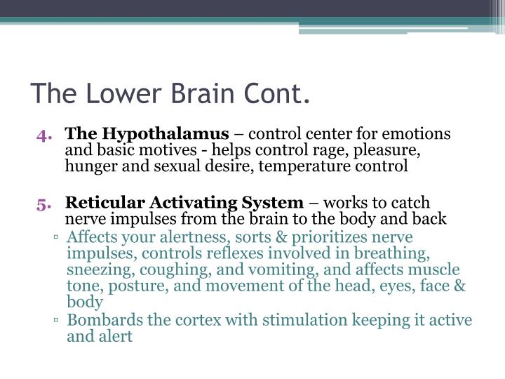 The Lower Brain Cont.