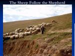 the sheep follow the shepherd