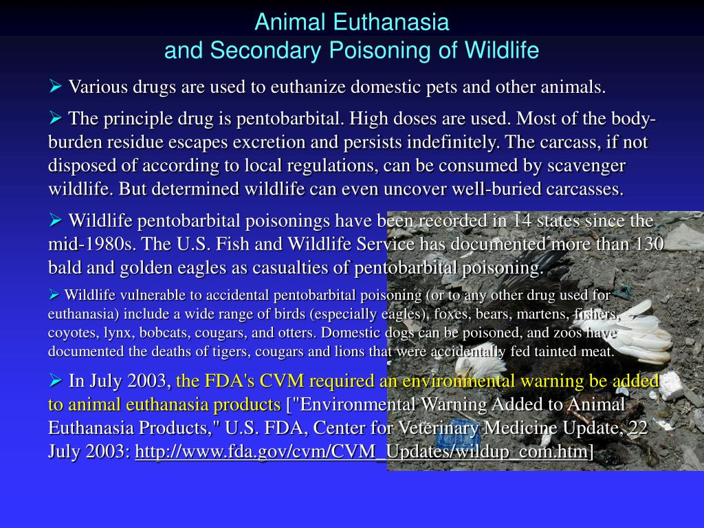 Animal Euthanasia