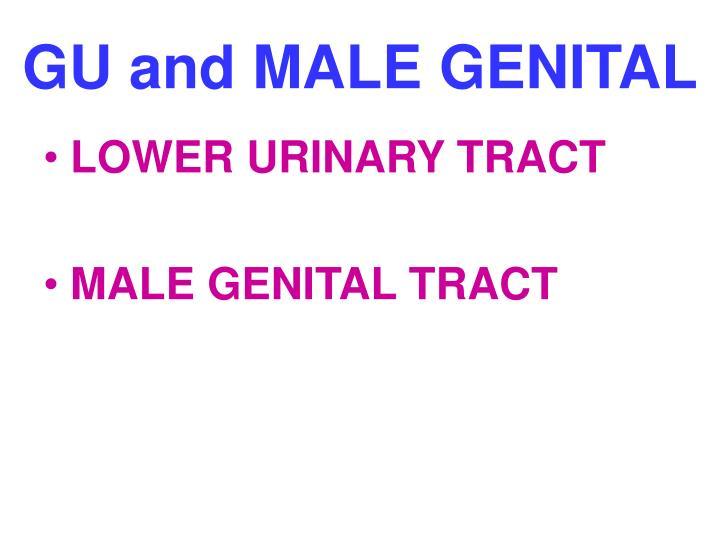 Gu and male genital
