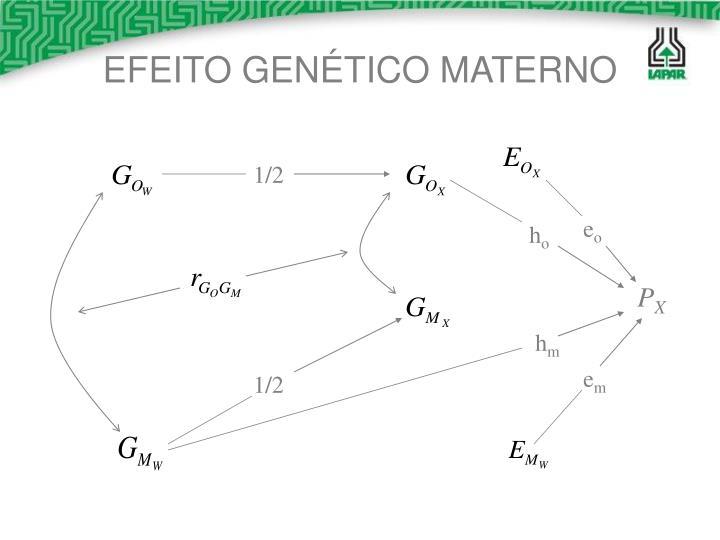 EFEITO GENÉTICO MATERNO