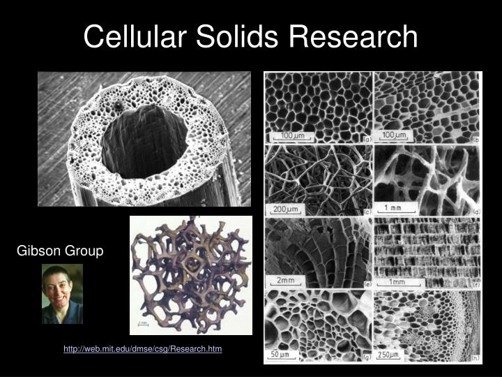 Cellular Solids Research