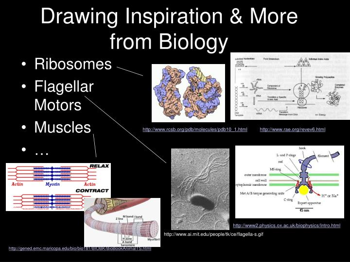 Drawing Inspiration & More from Biology