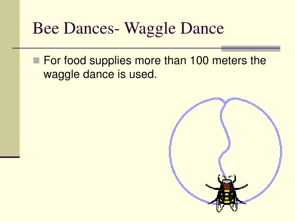 Bee Dances- Waggle Dance