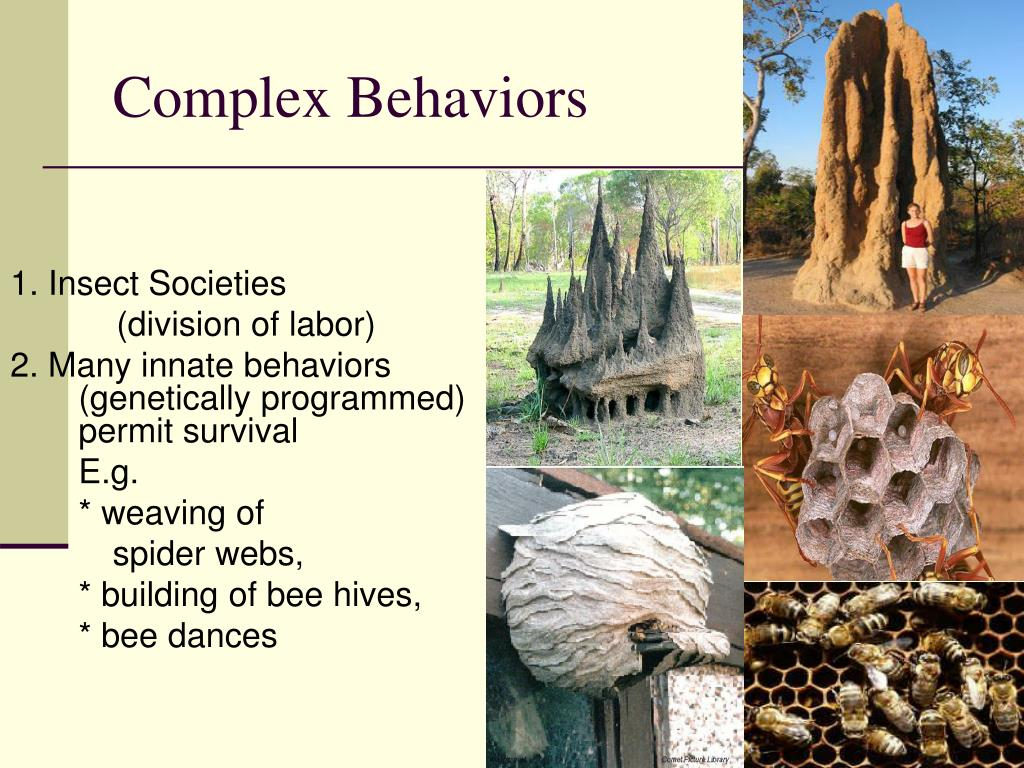 Complex Behaviors