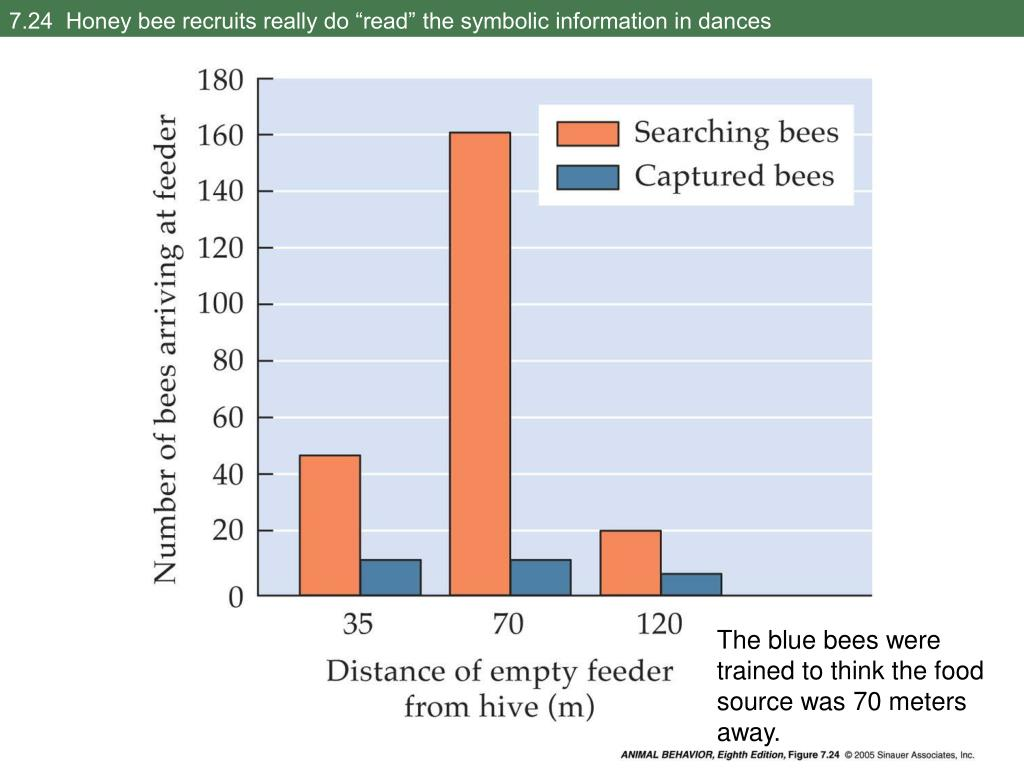 """7.24  Honey bee recruits really do """"read"""" the symbolic information in dances"""