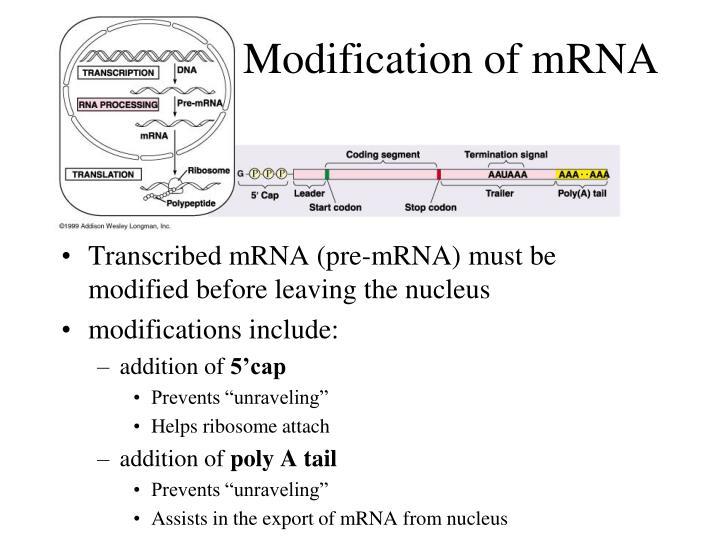 Modification of mRNA