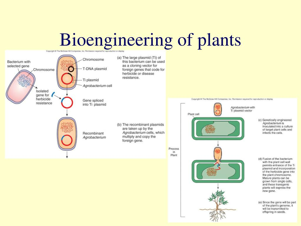 Bioengineering of plants