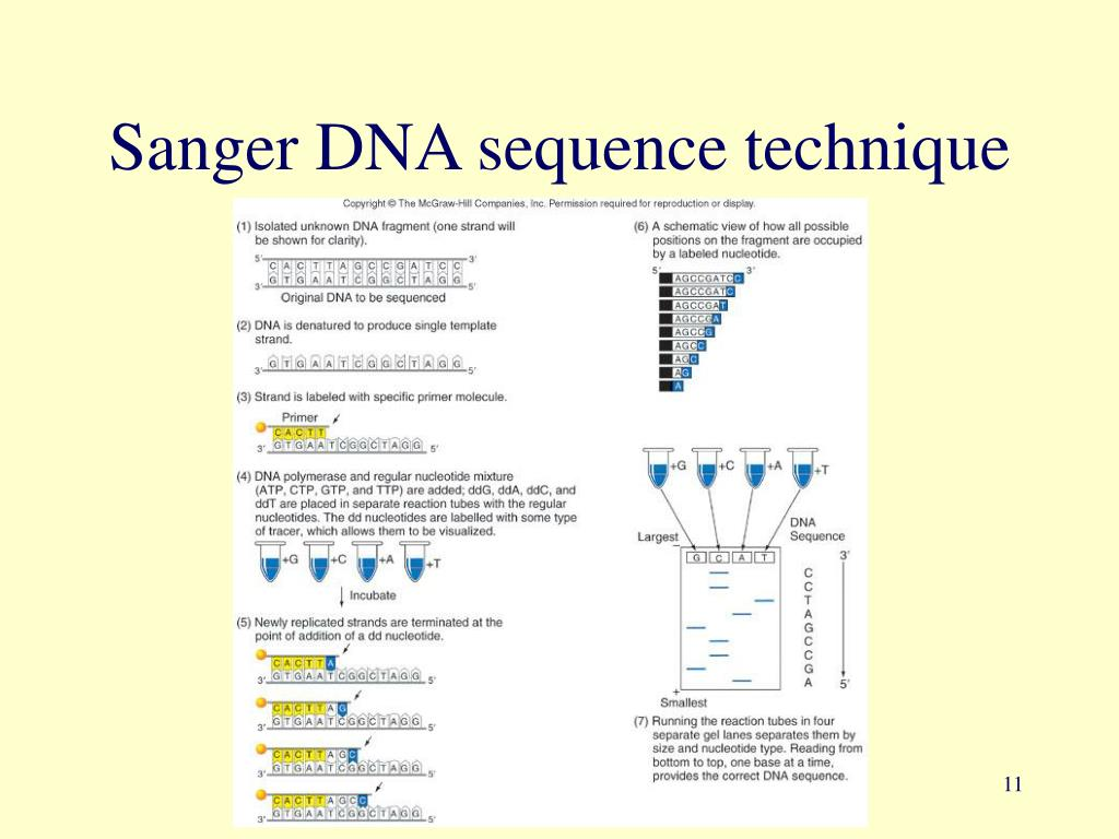 Sanger DNA sequence technique