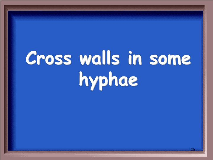 Cross walls in some hyphae