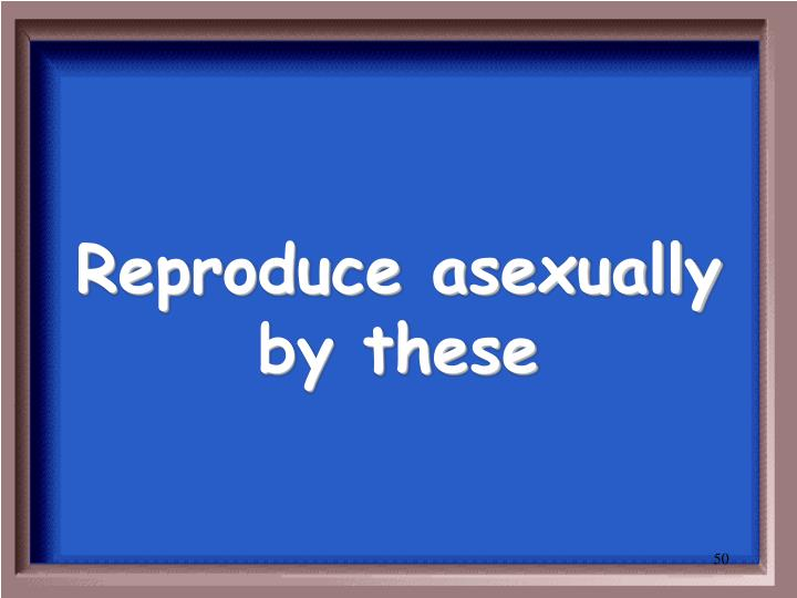 Reproduce asexually by these